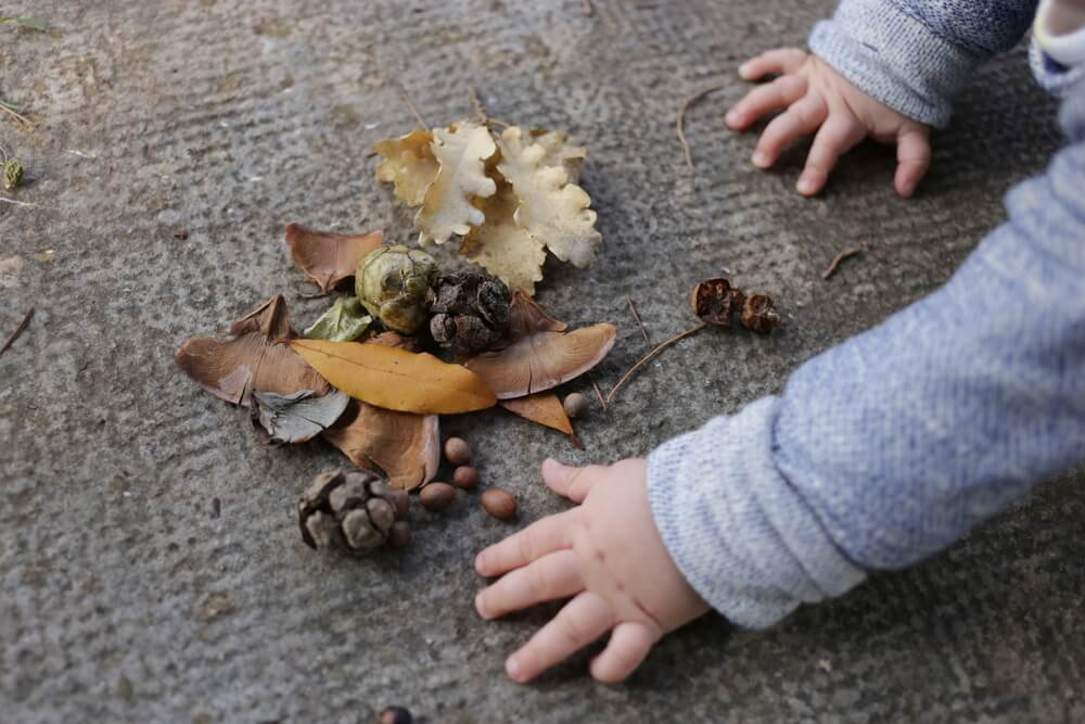 Kinder im Wald - Bäume raten