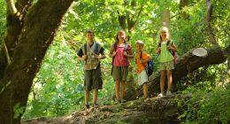 Spiele mit Kindern im Wald