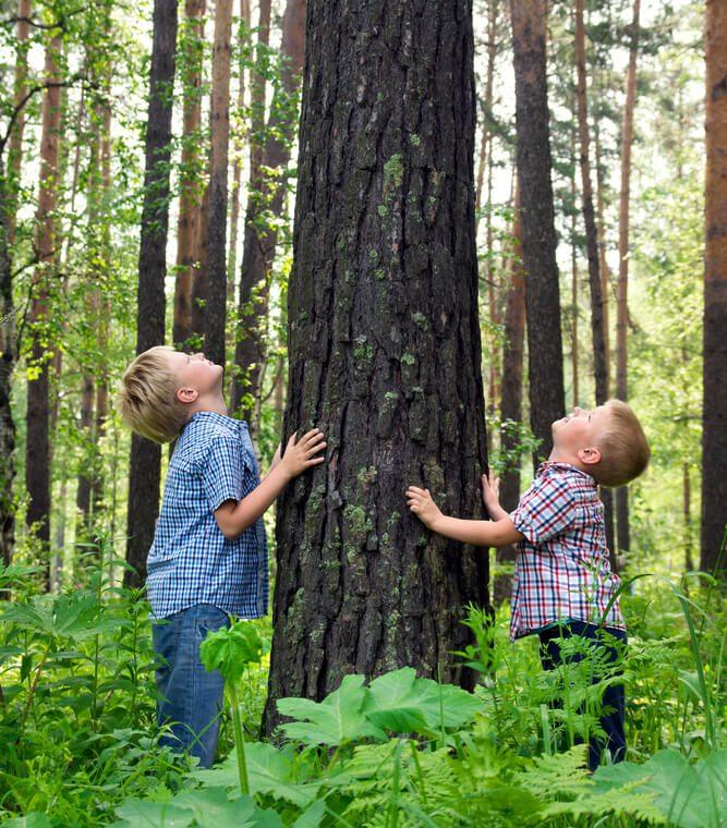 kreativ im Wald spielen